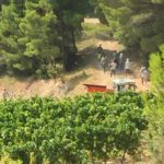 Harvest In The Middle Of The Pine Trees